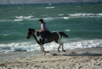 Horse Riding Excursions